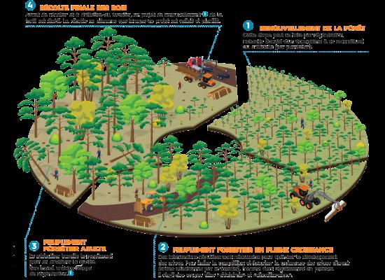 recolte-forestire